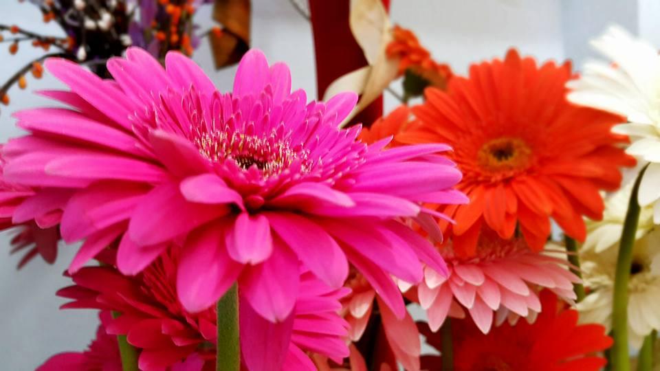 Antalya Işıklar Çiçekçi – 0538 9692901 Gülşen Çiçek Evi (17)