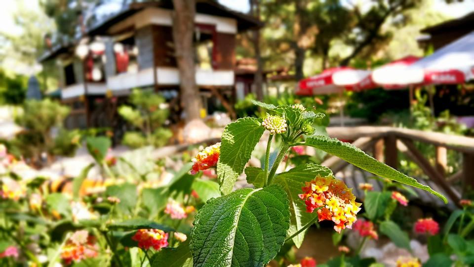 Paşa Kır Bahçesi Çakirlar – 0242 4394747 – Antalya Van Kahvaltısı Çakırlar Kahvaltı Yerleri (17)