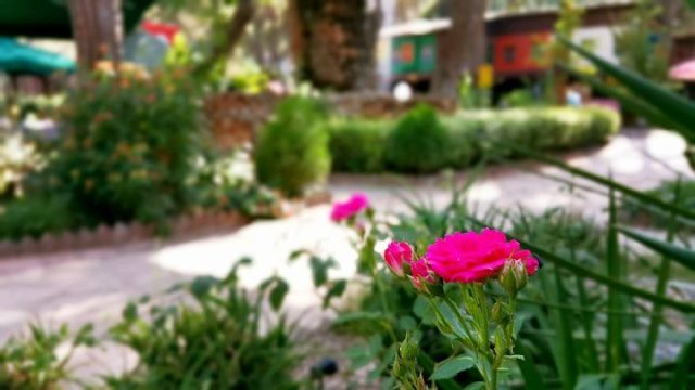 Paşa Kır Bahçesi Çakırlar - 0242 4394747