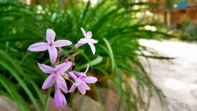Antalya Köy Kahvaltısı - 0242 4394747 - Çakırlar Gzöleme Bazlama Paşa Kır Bahçesi Çakirlar (21)