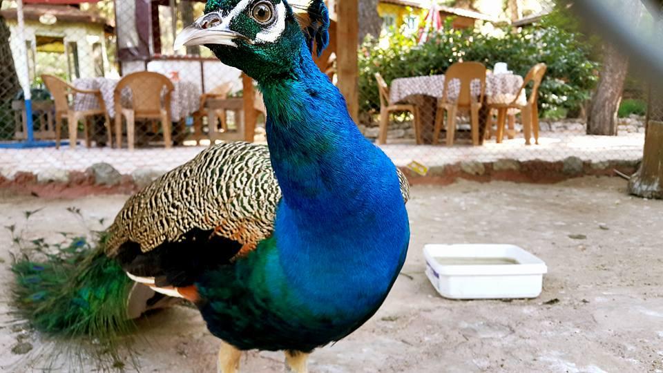 Antalya Köy Kahvaltısı – 0242 4394747 – Çakırlar Gzöleme Bazlama Paşa Kır Bahçesi Çakirlar (5)