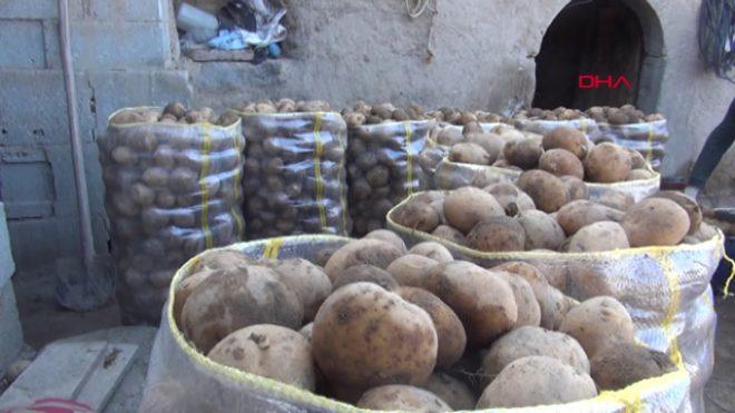 Niğde'den tanzime günlük 100 ton patates gidiyor