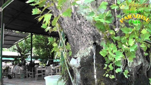 Fethiye Saklıkent Restaurant Kahvaltı Paradise Park Brunch Breakfast Natural Beauty Rafting