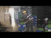 Öz Atmaca Nakliyat Komisyonculuk Ltd.Şti. Ali Sönmez - GAZİPAŞA