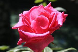 Çiçek Fotoğrafları - Free Stock Photos