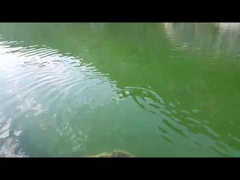 Natural Beauty in Dalyan River Best Hotel in Dalyan Fish Restaurants