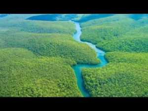 Amazon Yağmur Ormanlarının Muhteşem Doğası Hakkında Bilgiler Video Açıklamasında