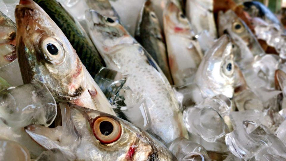 Yat Limanı Balık Restoranları – Ekici Restaurant Antalya balık dolabı dizaynı_4