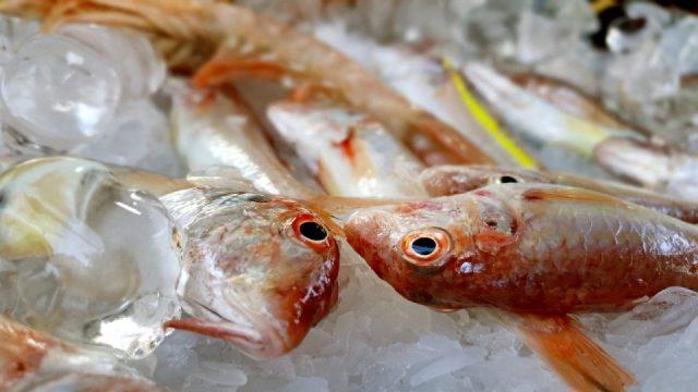 Yat Limanı Balık Restoranları - Ekici Restaurant Antalya balık dolabı dizaynı_5