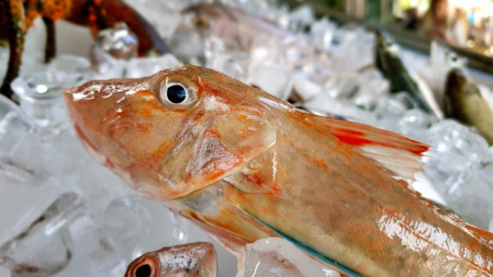 Yat Limanı Balık Restoranları – Ekici Restaurant Antalya balık dolabı dizaynı_8