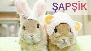 ŞAPŞİK - 2 ❤  Sevimli ve komik hayvanlar