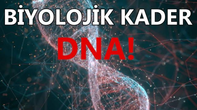Kararı Veren Kim? Siz Mi, DNA Mı? (Fixed Action Patterns)