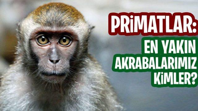 Maymunlarla akraba mıyız ?