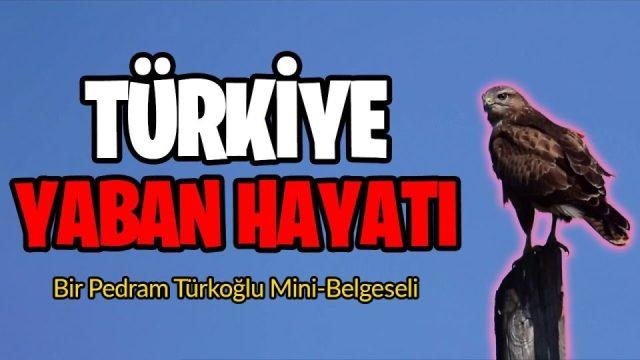 Türkiye Yaban Hayatı - Yeni Mini-Belgesel !