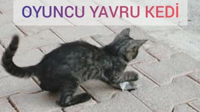Yavru kedi bulduğu her şeyle oynuyor 😅❤😊