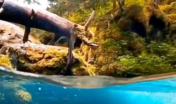 Dereden müthiş su altı görüntüsü (video)