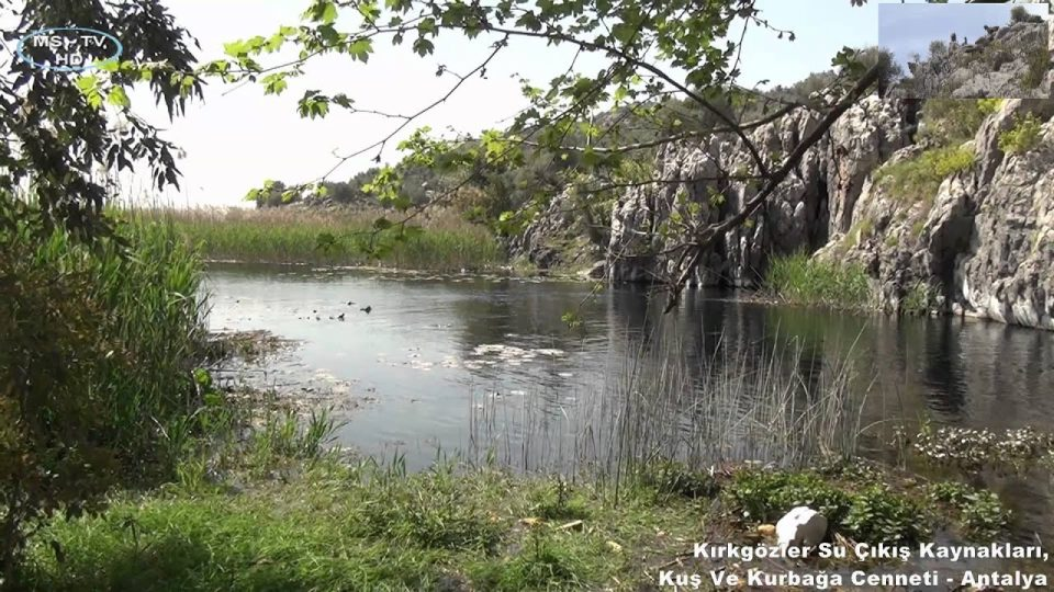 Kırkgözler Su Çıkış Kaynakları, Kuş ve Kurbağa Cenneti – Antalya