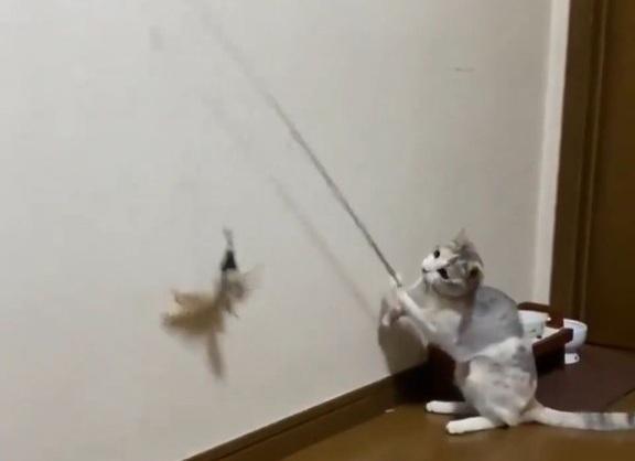 Balık avcısı kedi olta kamışı kullanıyor