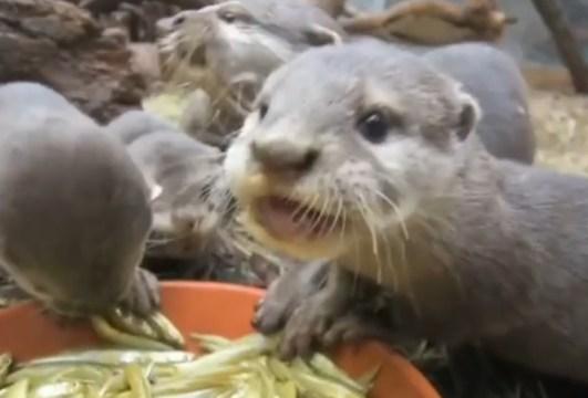 """""""Balık yiyoruz, buyrun beraber yiyelim"""""""