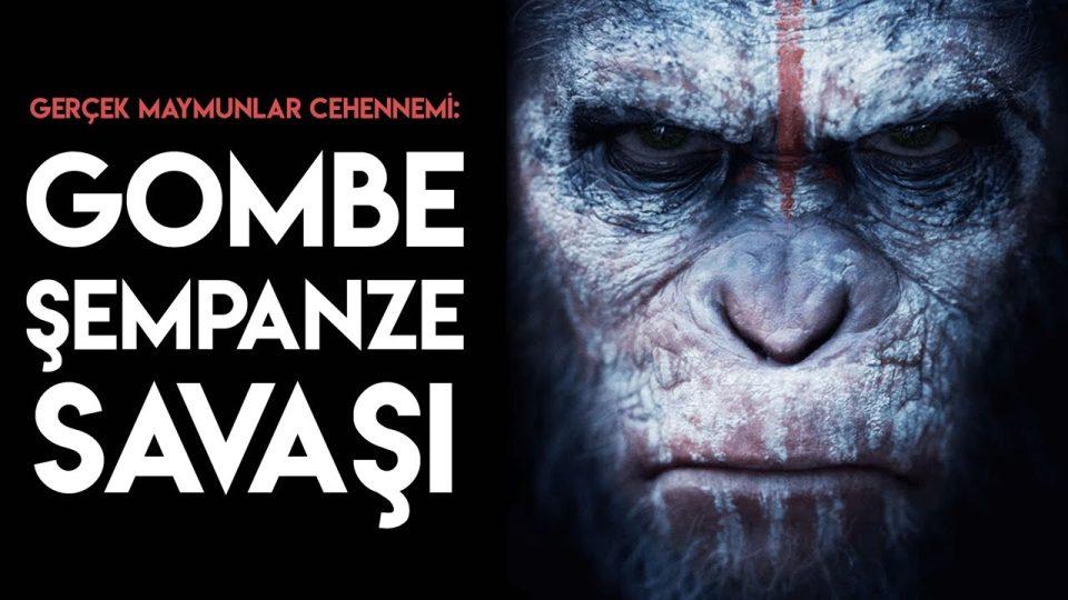 Gerçek Maymunlar Cehennemi: Gombe Şempanze Savaşı!