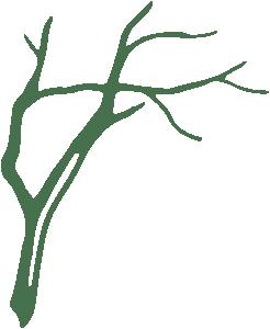 Branch-2