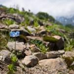 【白馬五竜高山植物園】概要や花の見頃を解説!