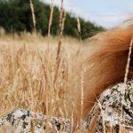 Английские пейзажи в новых ароматах от Jo Malone