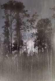 Выставка Мэттью Брандта «Таинственный лес»