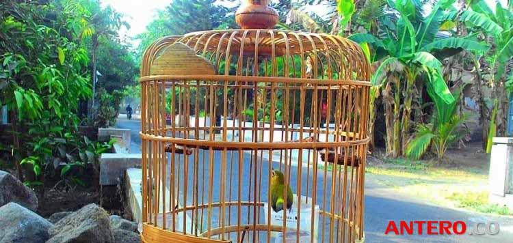 Cara Membuat Sangkar Burung Bentuk Bulat