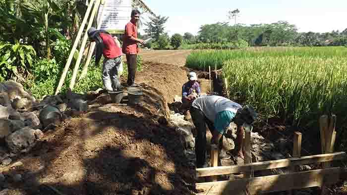 Petani Desa Tinggar Kecamatan Curug Siap Hadapi Musim Kemarau