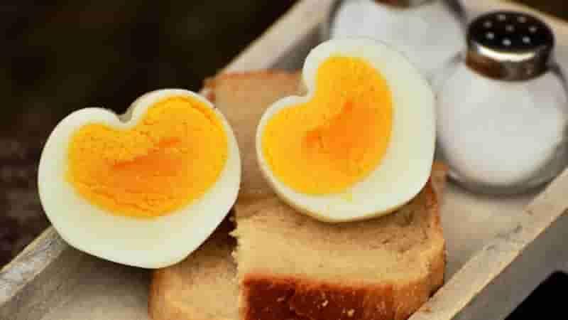 Pengertian Telur lengkap beserta Jenis-jenis Telur