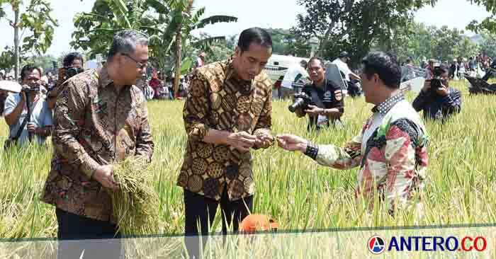 Jokowi Akan Duduk Bersama Dengan 2.000 Pengusaha Muda di Banten