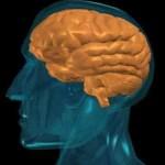 Οι πολιτικές μας πεποιθήσεις καθορίζονται από τον εγκέφαλο!