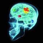 """Ο ανθρώπινος εγκέφαλος δεν έχει κανένα """"Σημείο του Θεού"""""""
