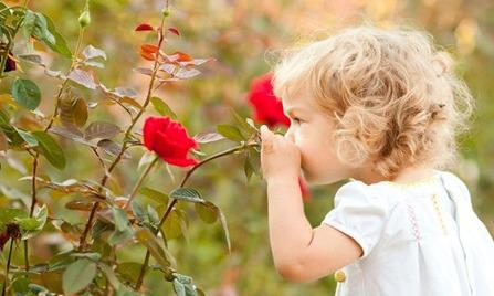 girl-rose