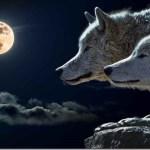 Η εσωτερική μάχη καλού και κακού – «Οι δύο λύκοι»