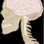 Οι άνθρωποι χρησιμοποιούν μόνο το 10 % του εγκεφάλου τους;