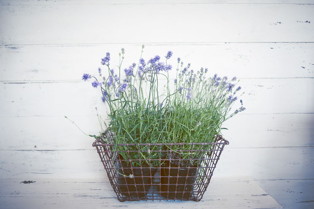 Basket of lavender at the St Mawes Hotel