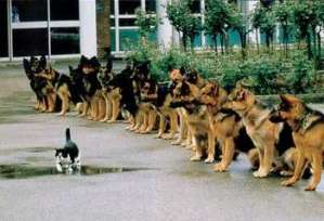 obedience_dog-cat_350