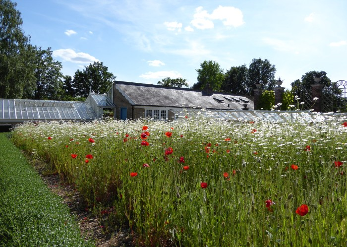 Poppies and Daisies Myddleton House