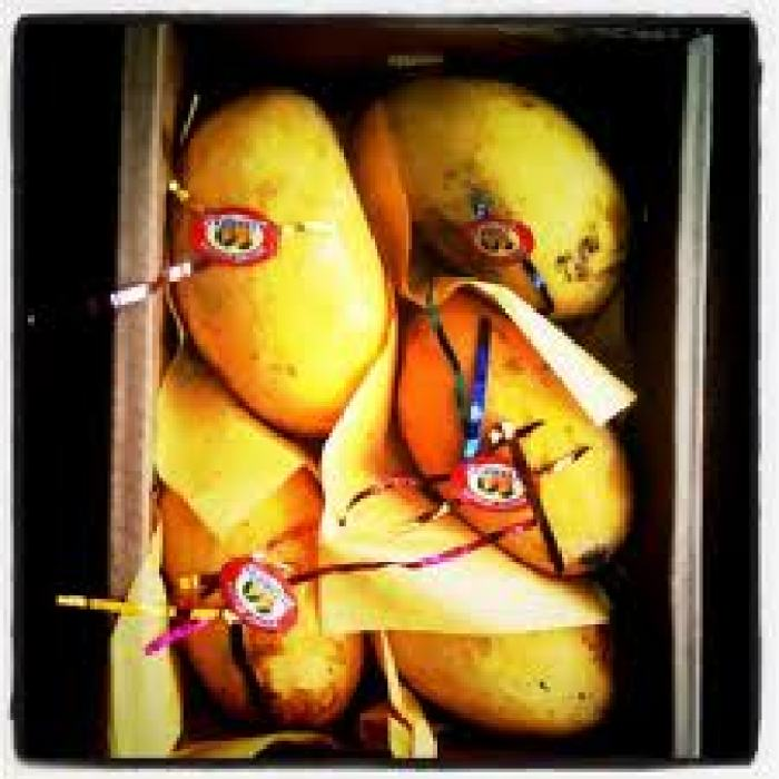 A box of be-jewelled and succulent Honey Mangoes.