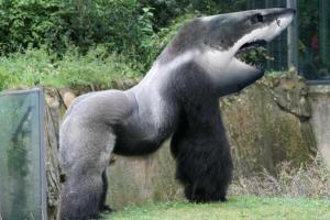 GorillaShark