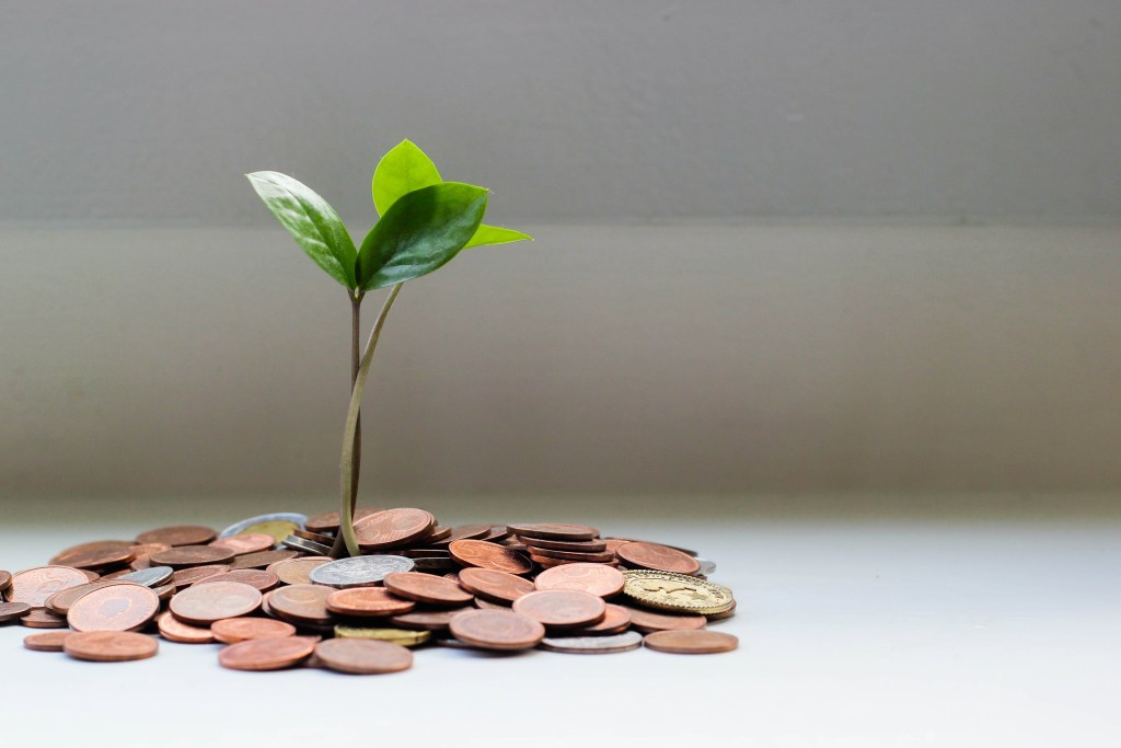 plant growing with coins.