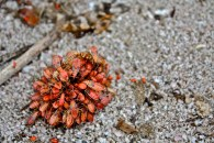 Bugs on seed