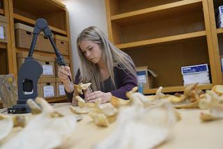 Savannah Holcombe analyzing scapula bones