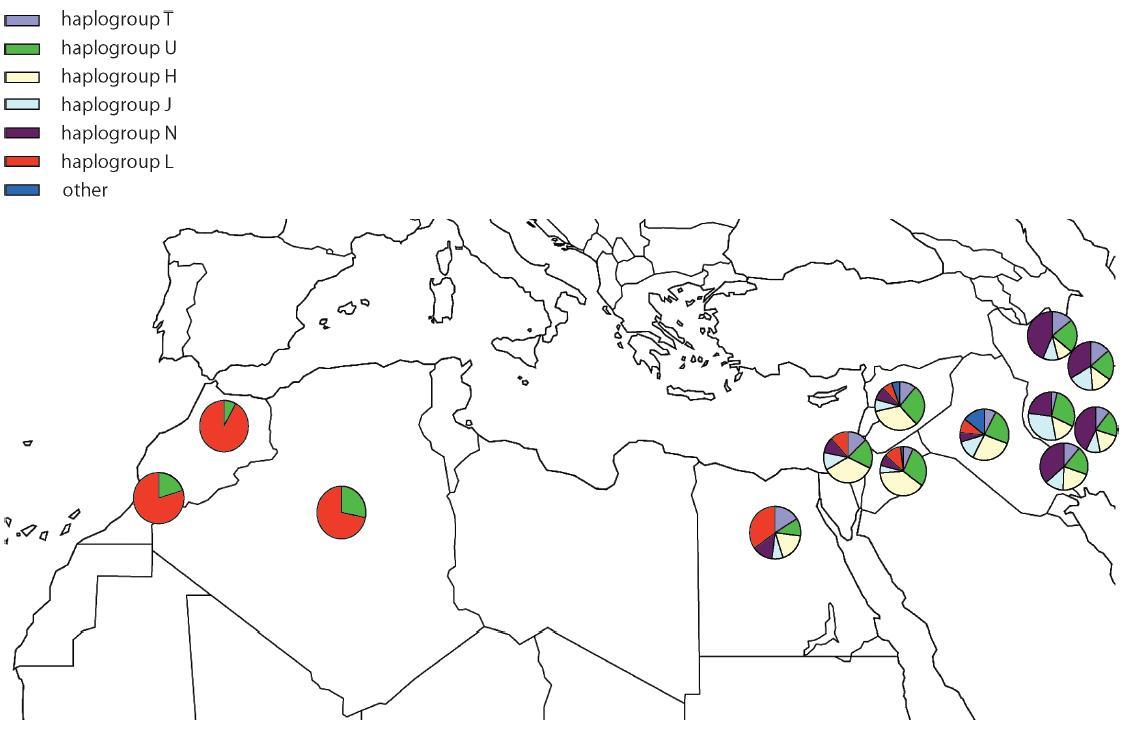 mtDNA haplogroups in Indo-European-speaking groups and in Semitic-speaking groups