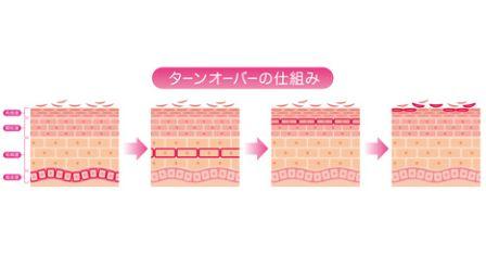 お肌のターンオーバーのイメージ図