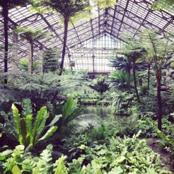 The fern room at the Garfield Park Conservatory