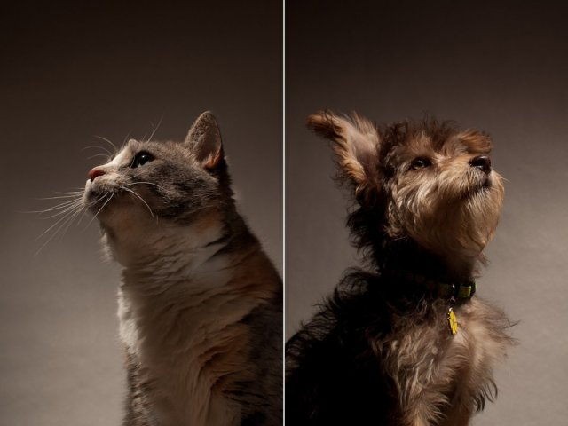dogs-and-cats-dont-see-in-shades-of-grey-they-can-see-in-blue-and-green-dogs-have-a-wider-field-of-vision-than-humans-but-cannot-see-as-far-in-front-of-them-as-we-can