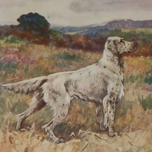 A 1909 Antique Print of an English Setter, print is in excellent condition with no foxing, by George Vernon Stokes.